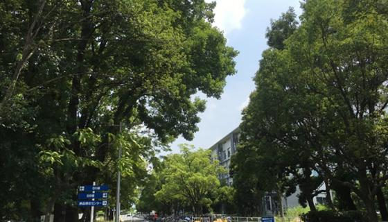 中百舌鳥キャンパスB4棟前の並木道  (2017年8月 No.6)