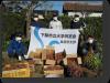 島根県支部 サツマ芋の収穫について